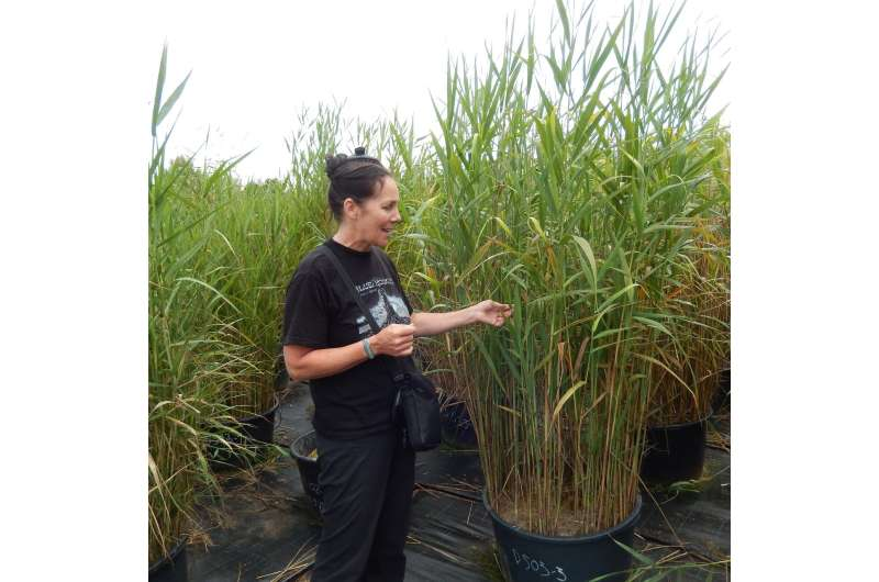 Genome size affects whether plants become invasive