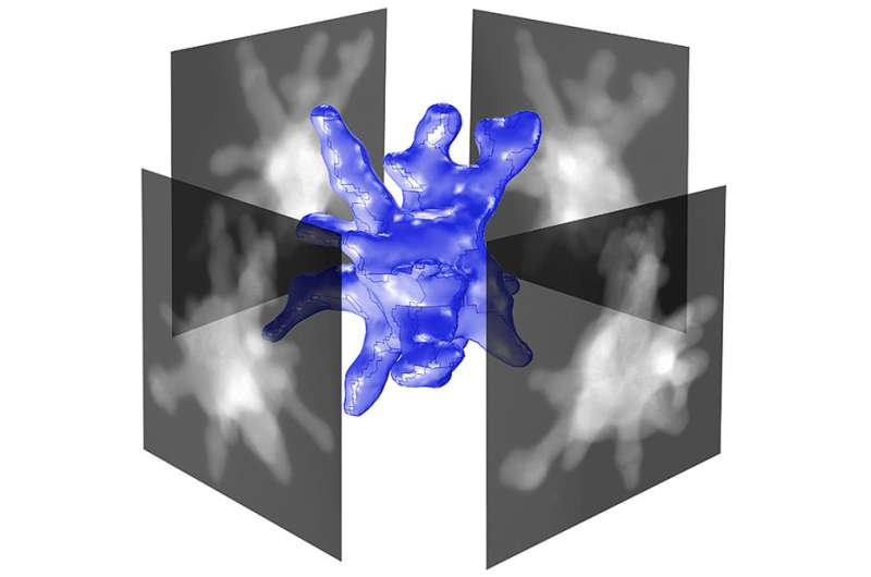 Getting an up-close, 3-D view of gold nanostars