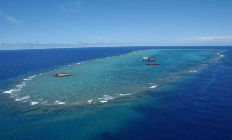 Giant clams tell the story of past typhoons