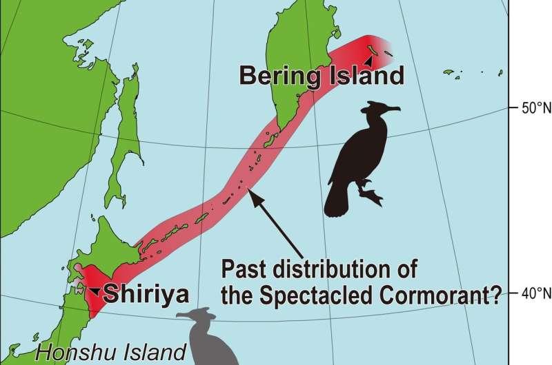 Giant, recently extinct seabird also inhabited Japan