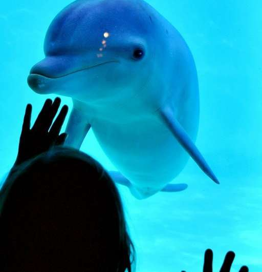 Girl and dolphin examine each other at the dolphinarium in Port-Saint-Pere, western France