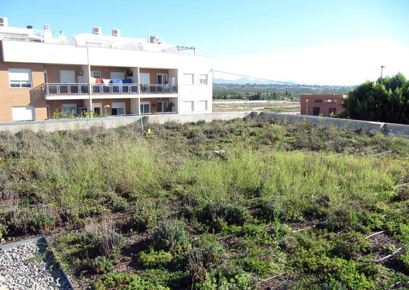 Green roofs effective for adapting to climate change
