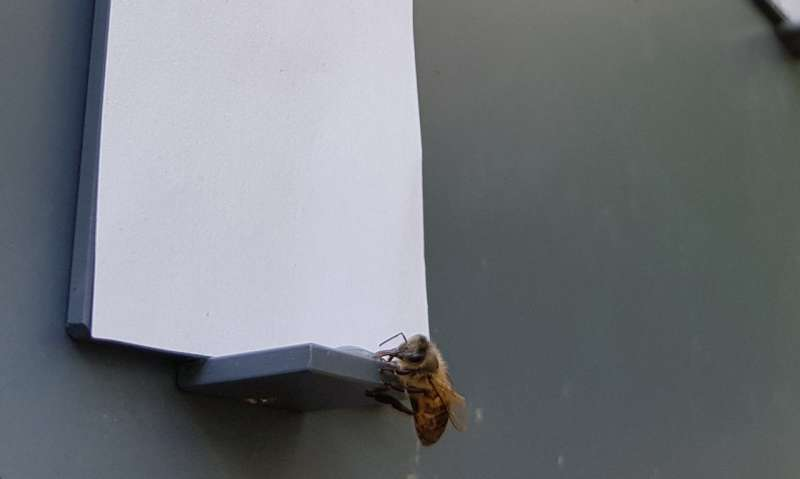 Honeybees zero in on nothing