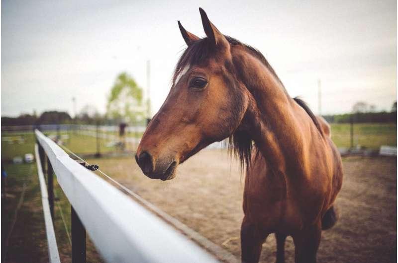 Horses get the flu, too