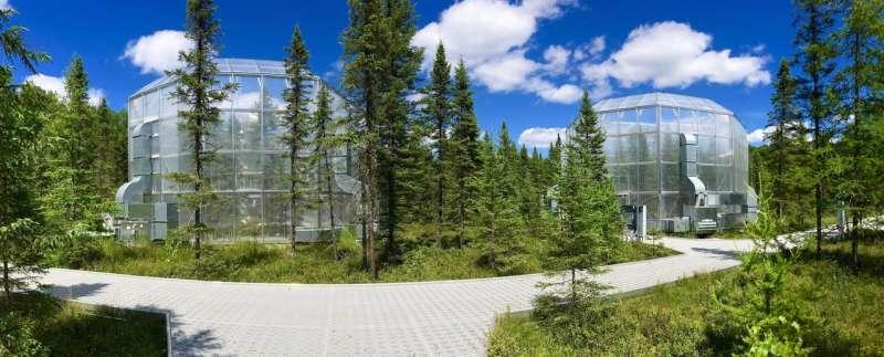 Hotter temperatures extend growing season for peatland plants