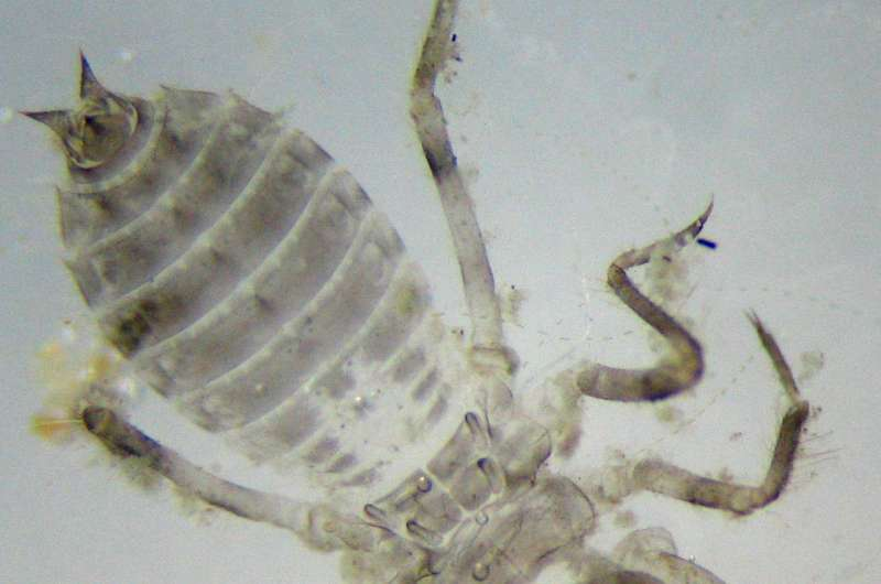 How dragonfly larvae could inspire more effective artificial heart valves