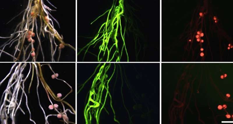 How leaves talk to roots