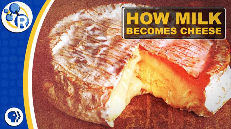 How milk becomes cheese (video)