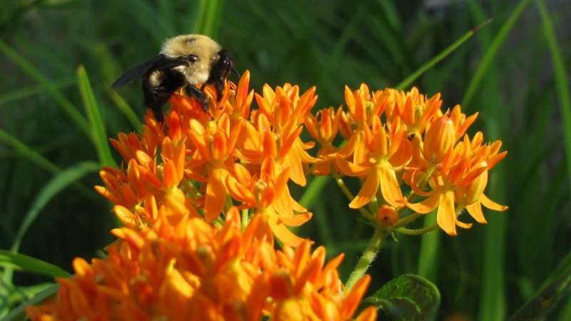 How urban heat affects bee populations