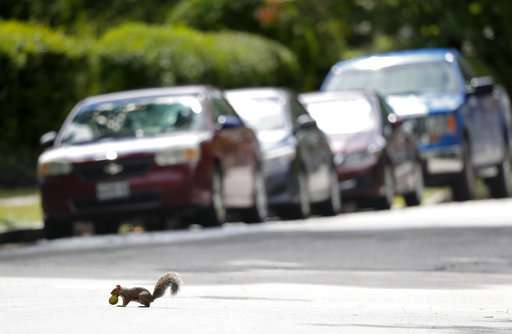 Huge squirrel population chomps crops, driving farmers nuts