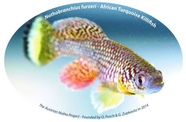 Important aging mechanism in fish model Nothobranchius furzeri revealed