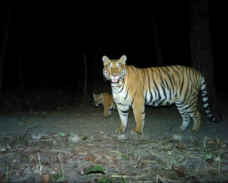 In 2010, Nepal and 12 other countries with tiger populations signed an agreement to double their big cat numbers by 2022 and the