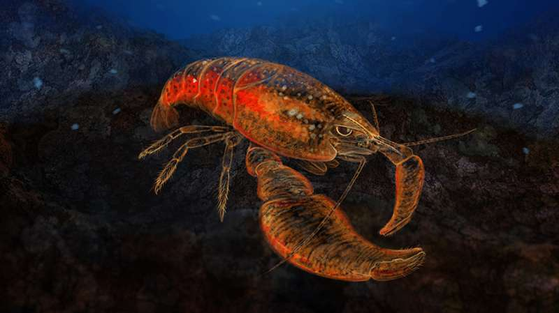 In a hole in a tunicate there lived a hobbit: New shrimp species named after Bilbo Baggins