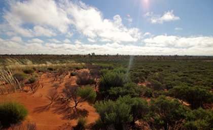 Indigenous fire practice protecting the Gibson Desert's biodiversity