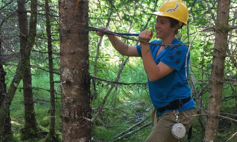 In eastern US, adult trees adapt and acclimate to local climate