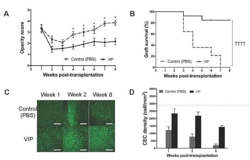 Injection of vasoactive intestinal peptide into the eye improves corneal transplant survival