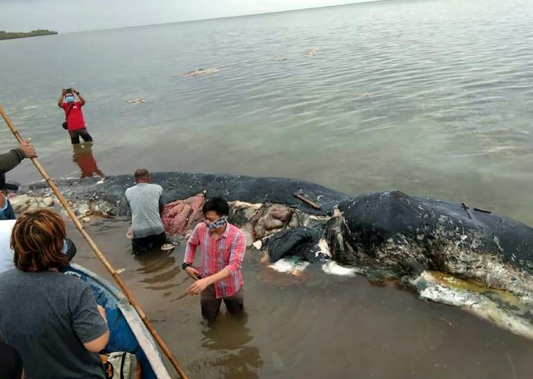 In November, a sperm whale washed up in Indonesia with nearly six kilograms (13.2 lbs) of plastic waste in its stomach. It had i