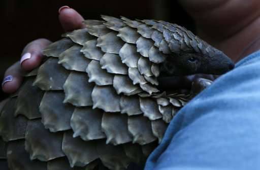 In South Africa, plans for a refuge for pangolins in peril