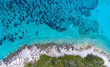 Insurance policy could save Earth's coral reefs