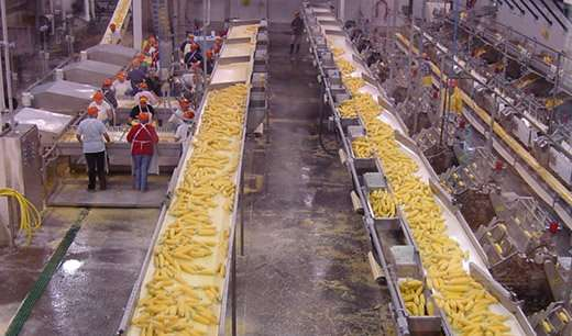 In sweet corn, workhorses win