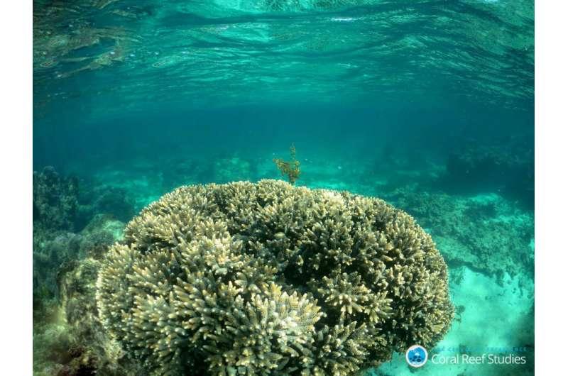 Internal control helps corals resist acidification