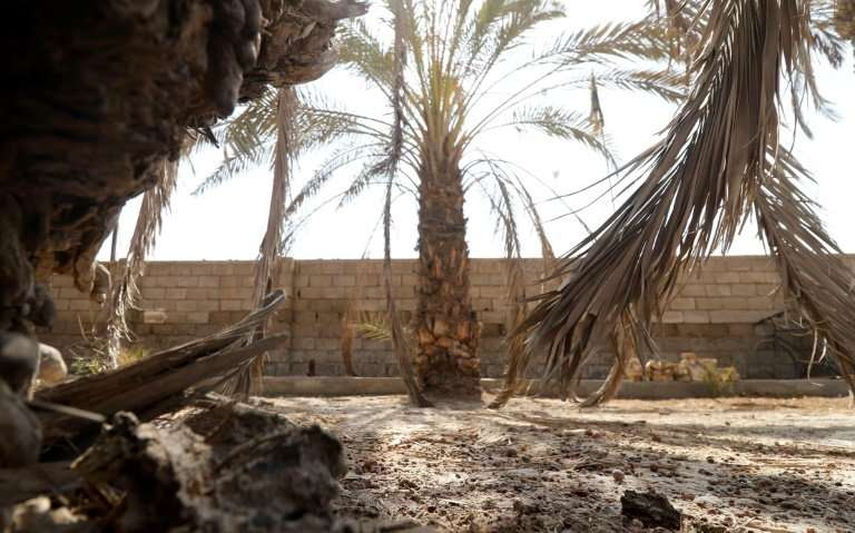 Iraq used to be known as the land of 30 million palm trees. But official estimates put the decline at 50 percent of pre-1980 num