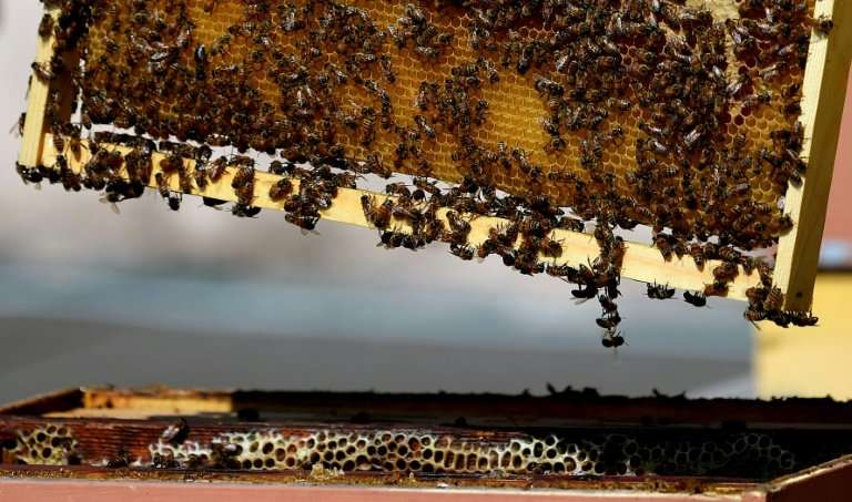 Italian beekeepers are spreading their wings into the study of pollution in Rome, working with the country's carabinieri militar