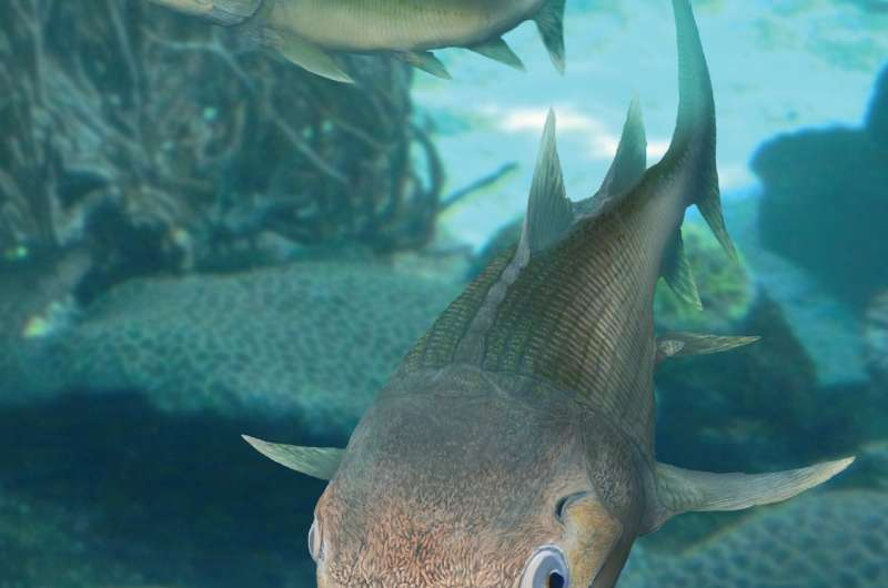 It's less than 2cm long, but this 400 million year old fossil fish changes our view of vertebrate evolution