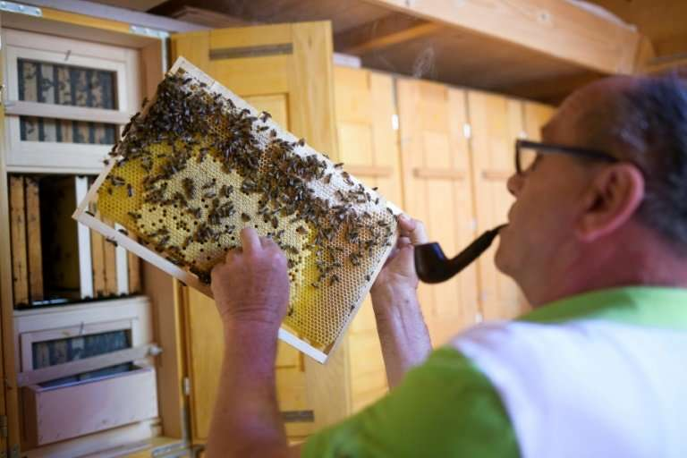 """Karl Vogrincic has more than 40 years of beekeeping under his belt and says it's """"a matter of love rather than anything els"""