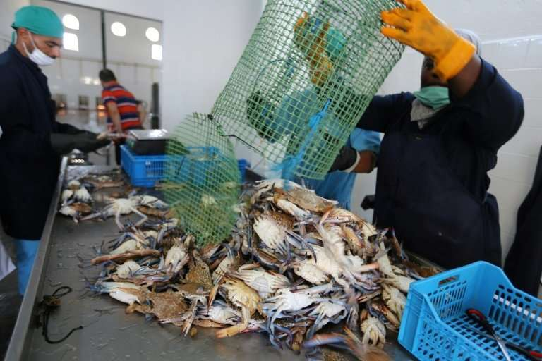 Last year, Tunisian authorities launched a plan to help fishermen turn the pest into profit