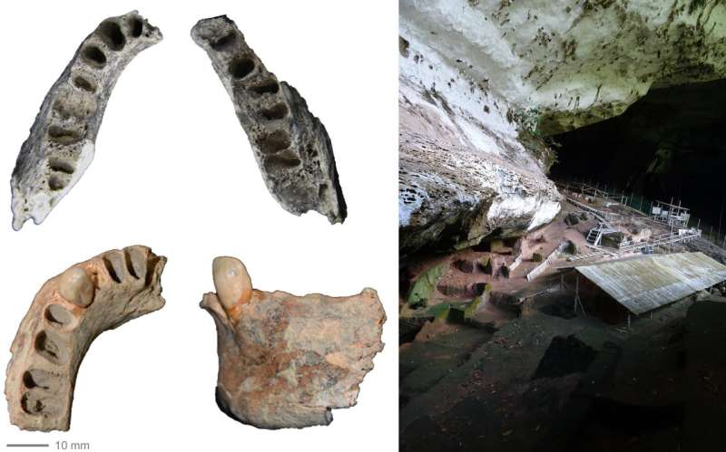 Late Pleistocene human mandibles from the Niah Caves may hint at ancient diets