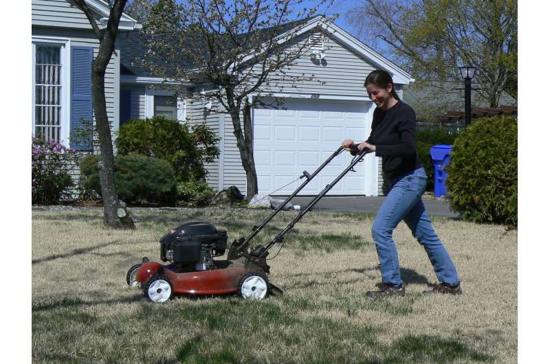 'Lazy lawn mowers' can help support suburban bee populations and diversity