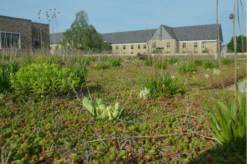 Low-income neighborhoods would gain the most from green roofs in cities like Chicago