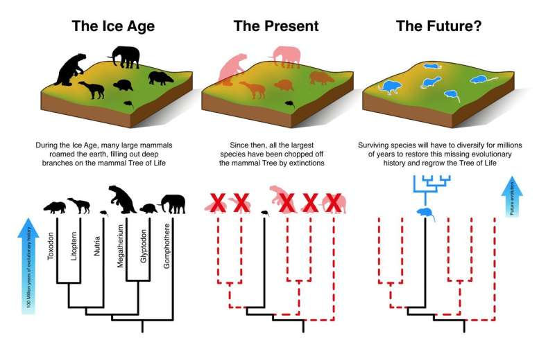 Mammals cannot evolve fast enough to escape current extinction crisis