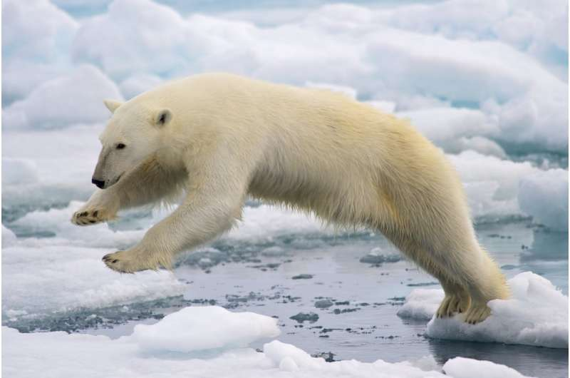 Many Arctic pollutants decrease after market removal and regulation