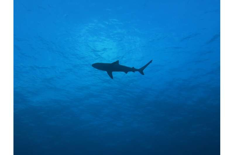 Missing sharks found through DNA in water samples