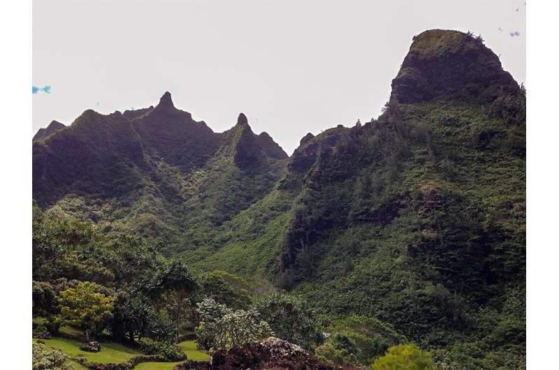 Mānoa: Hybrid forest restoration benefits communities and increases resilience