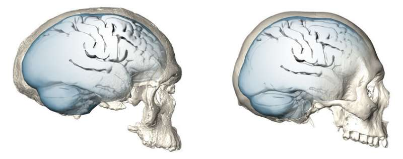 Modern human brain organization emerged only recently