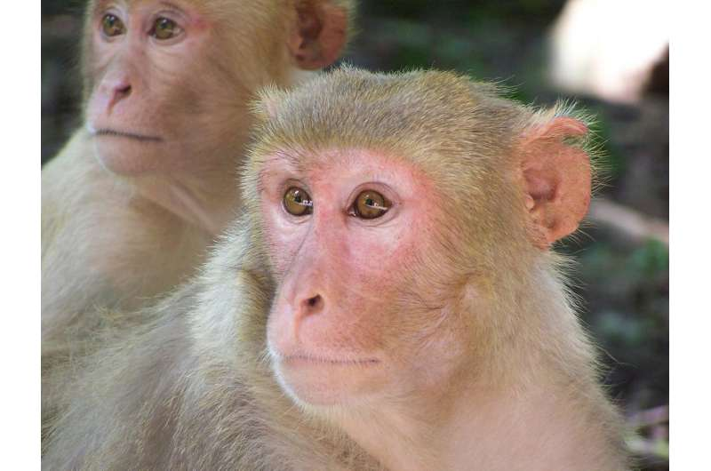 Monkeys do not start to resemble their parents before puberty