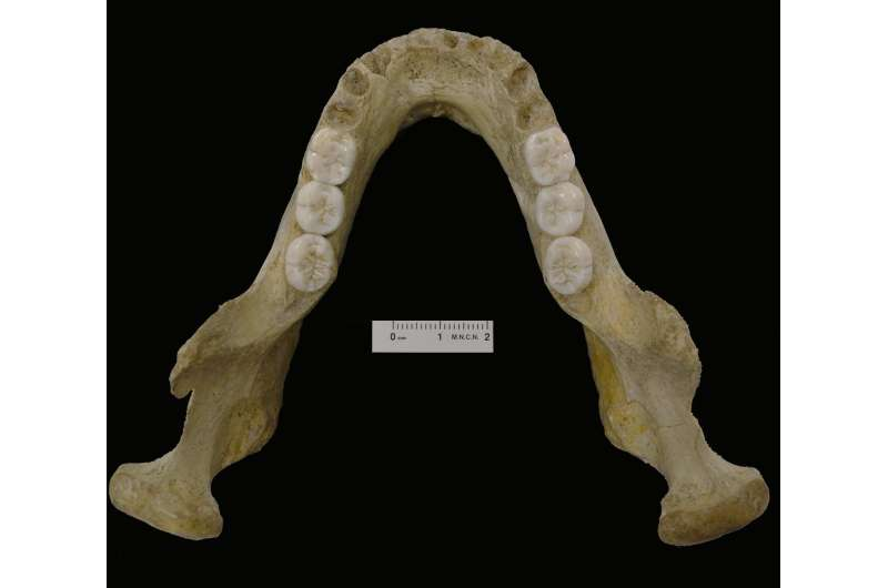 Montmaurin-La Niche mandible reveals the complexity of the Neanderthals' origin