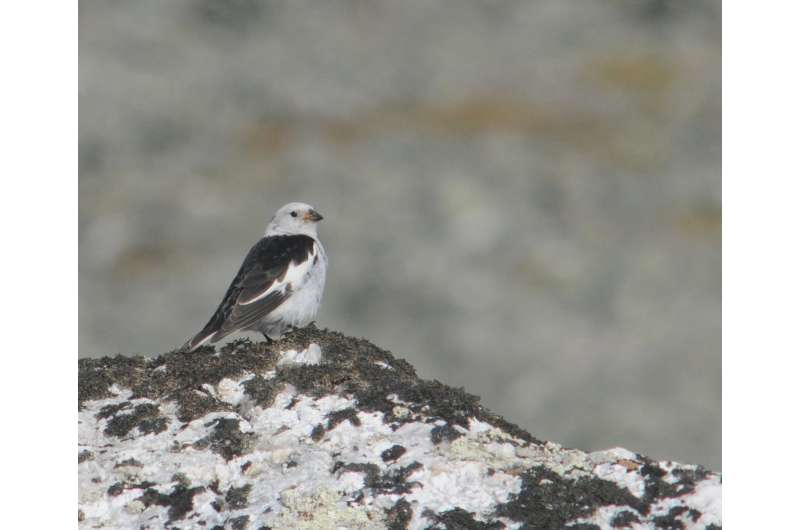 Mountain birds declining in Europe