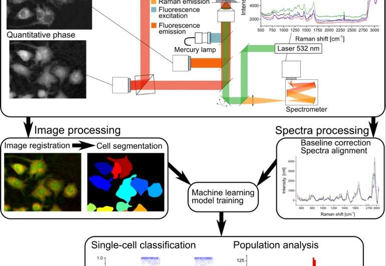 Multiple optical measurements reveal the single cell activation without contrast agent