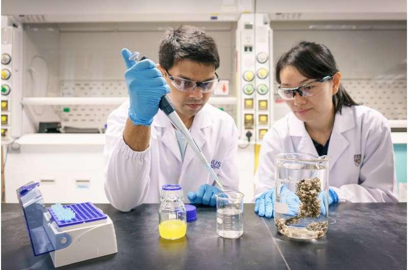 Nanoplastics accumulate in marine organisms and may pose harm to aquatic food chains