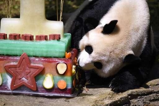 National Zoo closes panda habitat for possible pregnancy