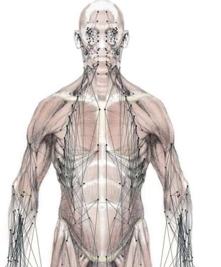 Network model of the musculoskeletal system predicts compensatory injuries