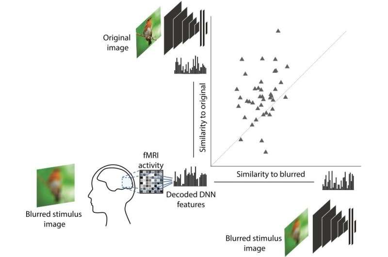 Neuro filter sharpens visual processing
