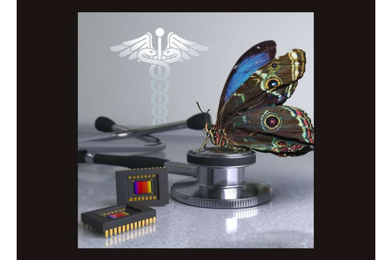 New camera inspired by butterfly eyes improves image-guided cancer surgery