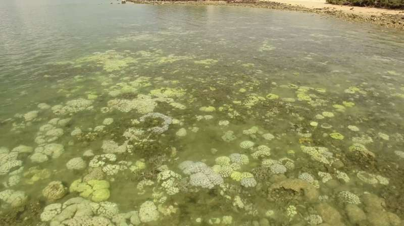New coral bleaching outbreak in Northern Territory a worrying sign of our warming oceans