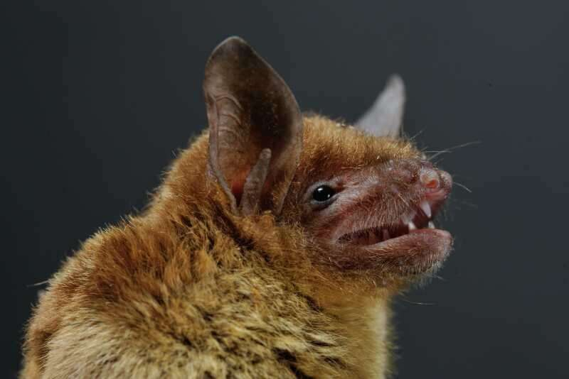 New coronavirus emerges from bats in China, devastates young swine