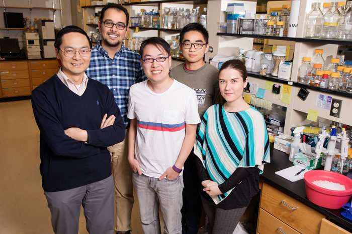 New CRISPR technology 'knocks out' yeast genes with single-point precision